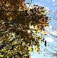 Autumn Sun by Neal Eslinger