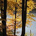 Autumn Sunlight by Nancie Johnson