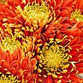 Autumn Sunrise Bouquet by Maria Urso