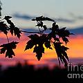Autumn Sunset by Cheryl Baxter