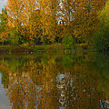 Autumn Sunset Tree Reflections by Jeremy Hayden