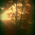 Autumn Sunsets by Marlene Williams