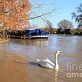 Autumn Swan by Paul Felix