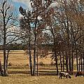 Autumn Texas Pasture by Janal Koenig