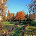 Autumn Tracks by Terri Waters