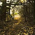 Autumn Trail In Woods by Yulia Kazansky
