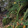 Autumn Trails by Margaret Pitcher