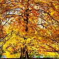 Autumn Tree by Michael Pachis