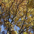 Autumn Tree by Steve Ball
