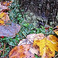 Autumn Tree Trunk  by MTBobbins Photography