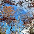 Autumn Trees And Heaven by Karen Adams