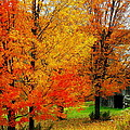 Autumn Trees By Barn by Rodney Lee Williams