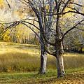 Autumn Trees by Eric Wheeler