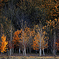 Autumn Trees by GuangYing WuJie