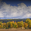 Autumn Trees In A Row by Randall Nyhof