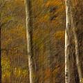 Autumn Trees by Judi Smelko