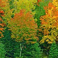 Autumn Trees by Pat Now