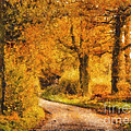 Autumn Trees by Pixel Chimp