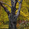 Autumn Trees3 by Vladimir Kholostykh