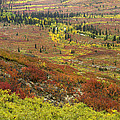 Autumn Tundra With Boreal Forest by Tim Fitzharris