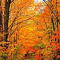Autumn Tunnel Of Trees by Terri Gostola