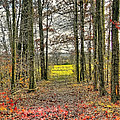 Autumn Tunnel Vision by Jim Lepard