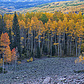 Autumn Valley by Morris  McClung