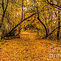 Autumn Walk by Brenton Cooper