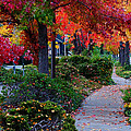 Autumn Walk In Grants Pass by Mick Anderson