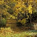 Autumn Walk by Lutz Baar