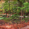 Autumn Walk by Paulette B Wright