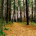Autumn Walk by Raymond Earley
