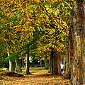 Autumn Walk by Susan Tinsley