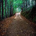 Autumn Walks by Edgar Laureano