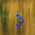 Autumn Watcher by Dan McCafferty
