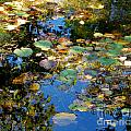 Autumn Water Lily Reflections  by Nancy Mueller