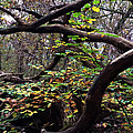 Autumn Wild Nature Denmark by Colette V Hera  Guggenheim