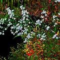 Autumn Wildflowers by Bill Jonscher