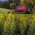 Autumn Wildflowers by Debra and Dave Vanderlaan