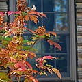 Autumn Window by Living Color Photography Lorraine Lynch