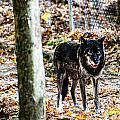 Autumn Wolf by Sheri Bartoszek
