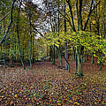 Autumn Woodland by Gary Eason