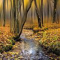Autumn Woodland by Ian Hufton
