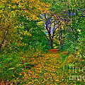 Autumn Woodland by Martyn Arnold