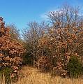 Autumn Woods by Annie Adkins