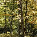 Autumn Woods II by Lisa Hurylovich