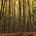 Autumn Woods by Karol Livote