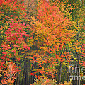 Autumn Woods by Mary Carol Story