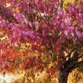 Autumn Xvii by Tina Baxter