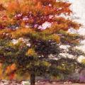 Autumn Xviii by Tina Baxter